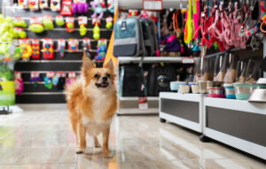 Small dog in a pet store