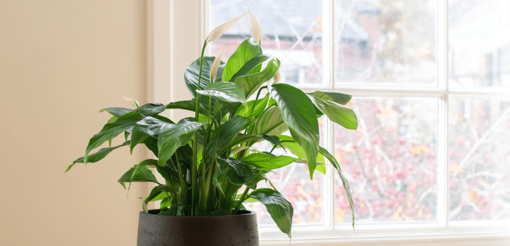 Plants to avoid while living at woodsview