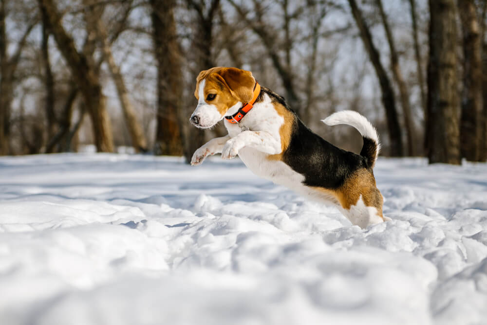 dog jumping into white snow at woodsview